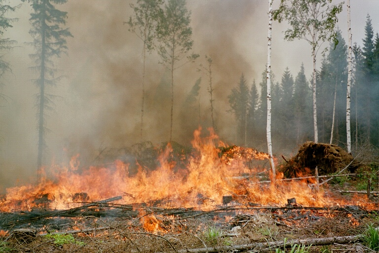 the destruction of forest essay