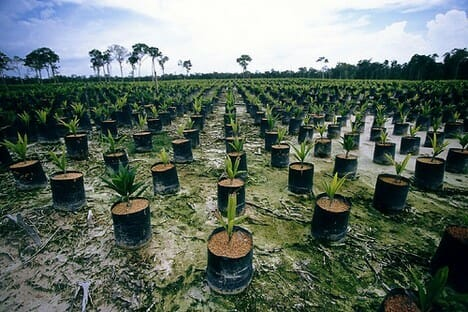 Palm oil industry in indonesia 2013