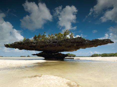 aldabra atoll parasol