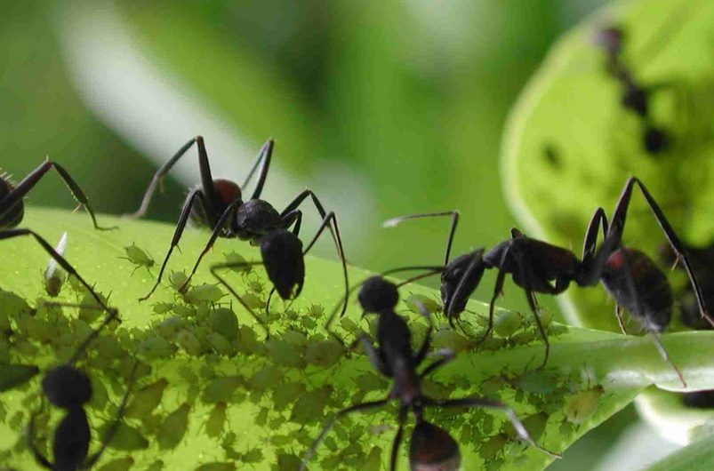 treat ants with natural methods