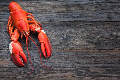 Do lobsters feel pain when boiled alive