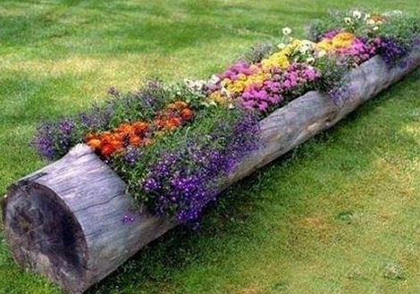 planter from old trunk