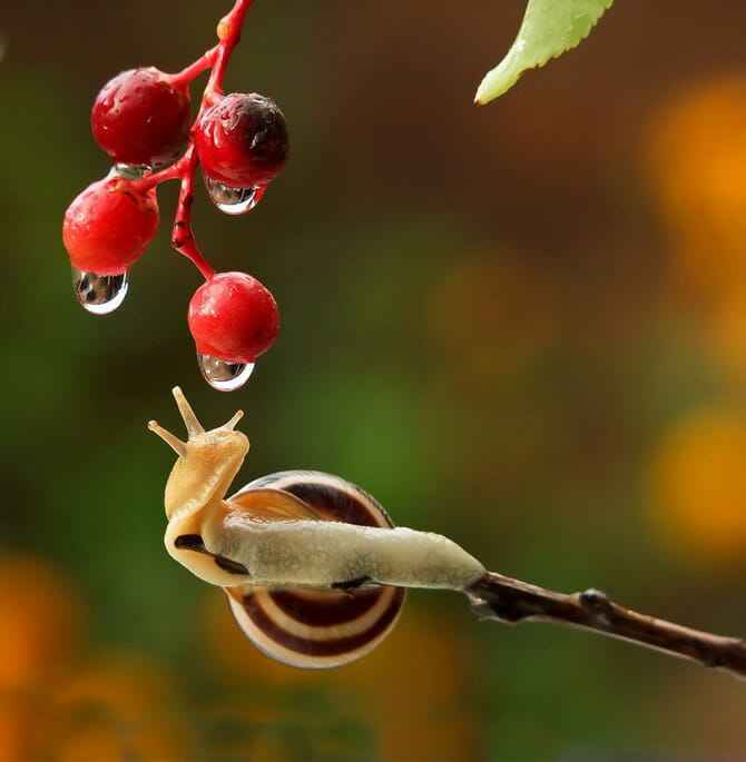 snail photo mishchenko