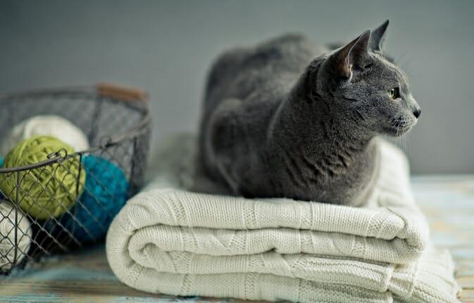 cat wool sweaters