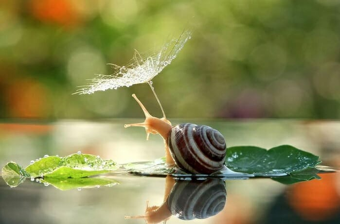 snail with umbrella