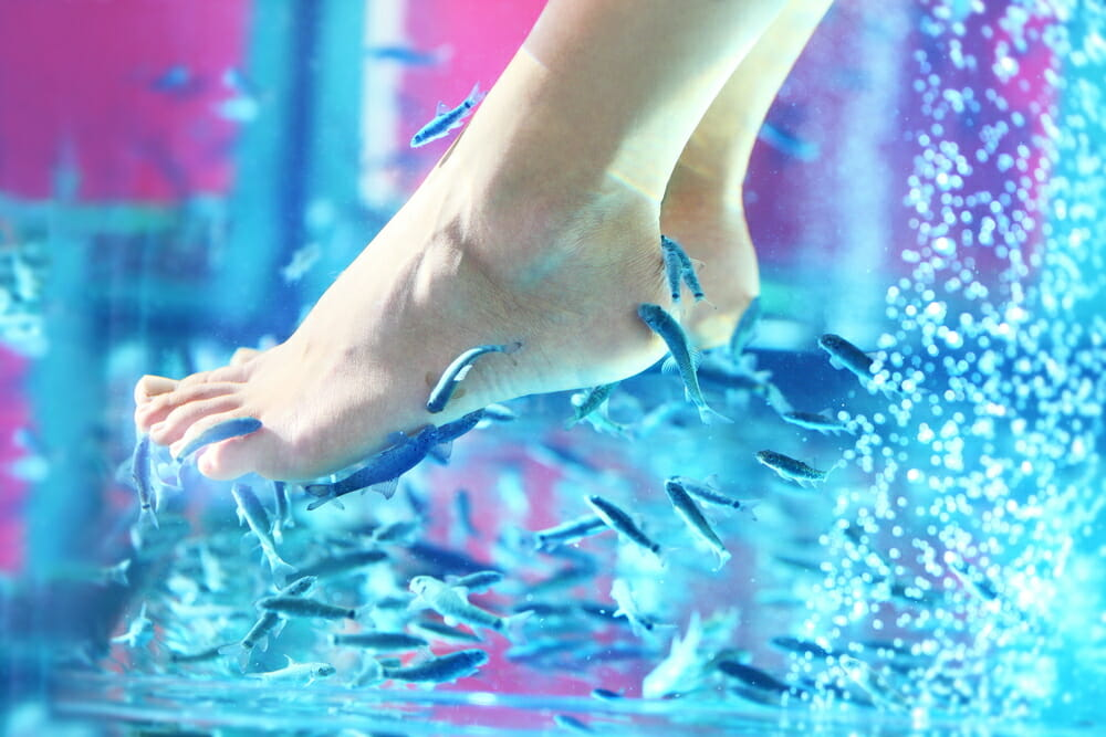 What to expect from a fish pedicure whatagreenlife for Fish eating dead skin spa