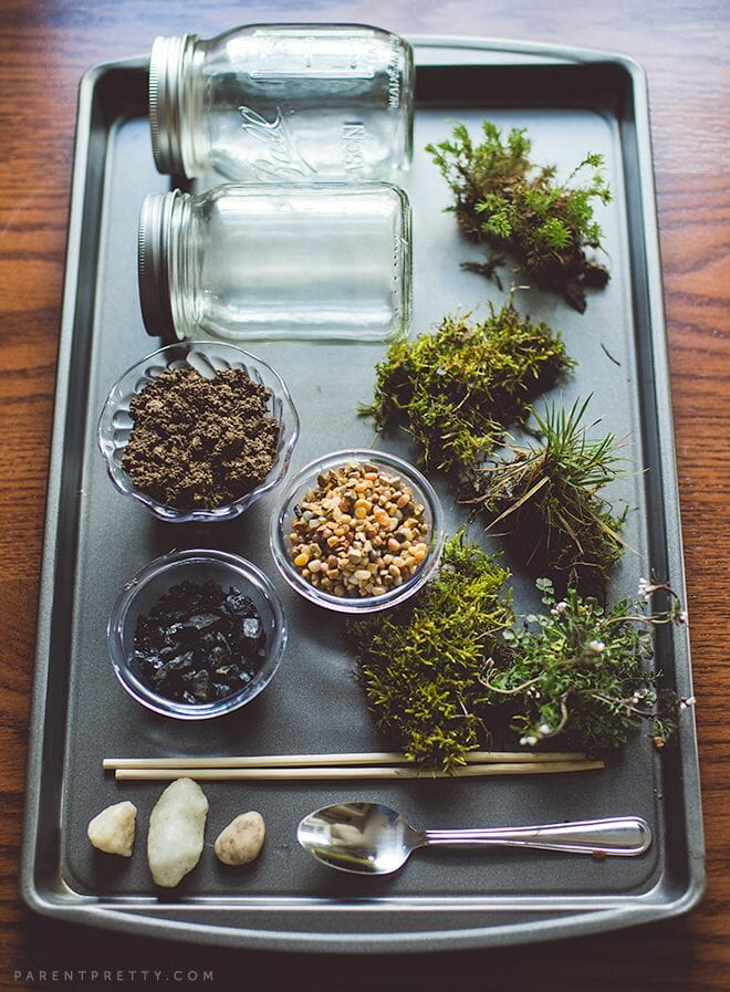 How to make a terrarium - terrarium supplies
