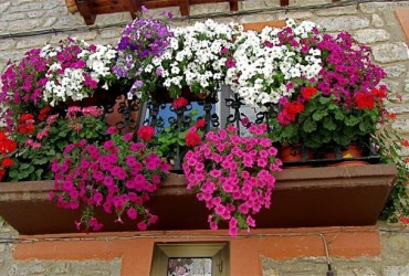the easy guide to balcony flowers whatagreenlife