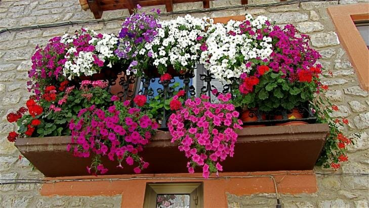 guide to balcony flowers