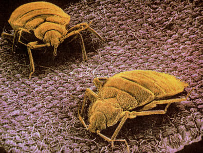 fight dust mites with natural methods