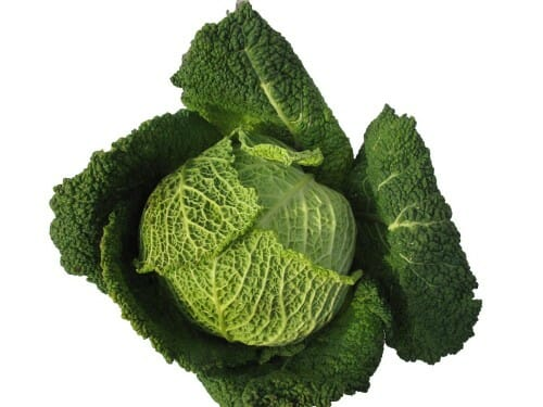 Savoy cabbage properties and health benefits